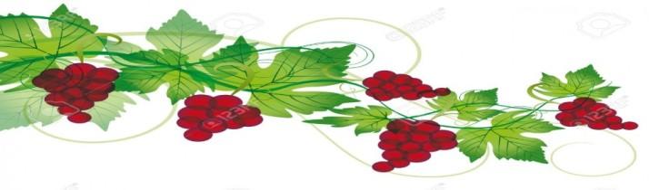 cropped-vines.jpg